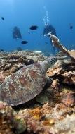 eine riesige Meeresschildkröte