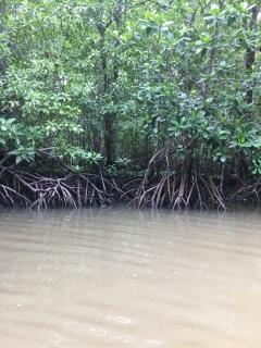 Hier sind frei lebende Affen versteckt