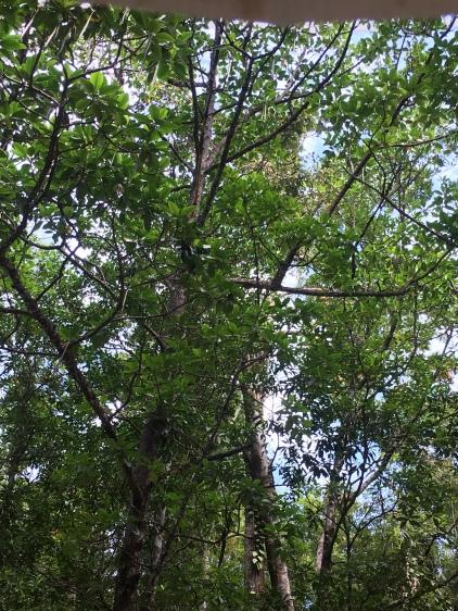Auf diesem Baum ist eine gelb-schwarze Schlange zu sehen