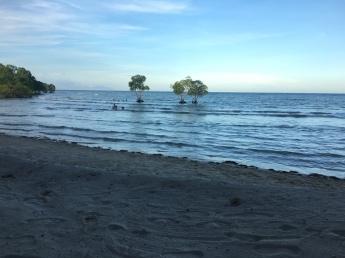 Bäume in der Flut