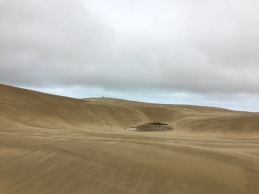 Te Paki Great Sand Dunes