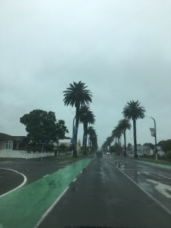 Kennedy Road in Napier