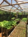 Garten vom Onkel