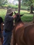 Pferdefrisur schneiden