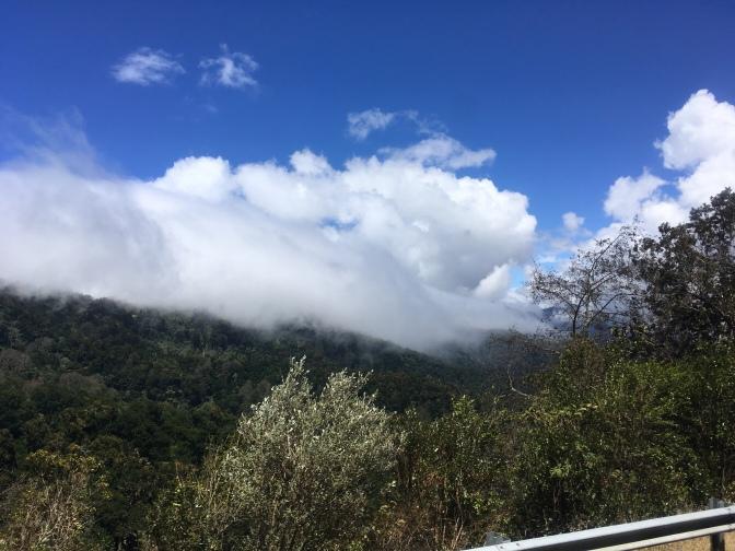 Nebelwald heißt auf englisch cloud forest
